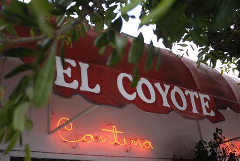el coyote location el coyote cafe