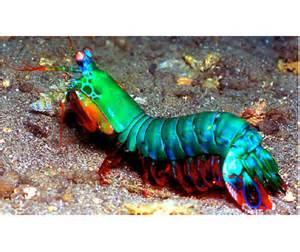 The Ten Worst Fish for Your Saltwater Aquarium   Blue Planet Aquarium