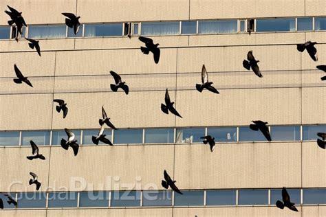 come scacciare i piccioni dal terrazzo come allontanare le tortore dal balcone jpeg kb come