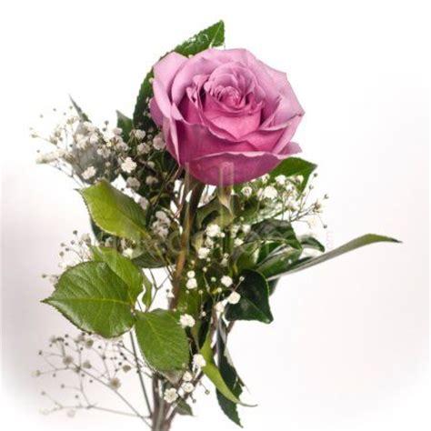 imagenes de flores individuales rosas individuales quedeflores com flores todo el a 241 o