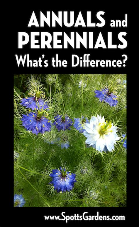 annuals and perennials what s the difference spotts