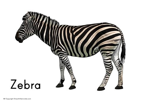 Free zebra print hearts coloring pages