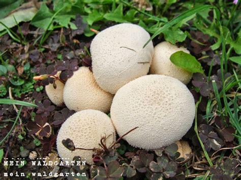 Bei Uns Wachsen Pilze Im Garten by Mein Waldgarten Pilze Im Garten