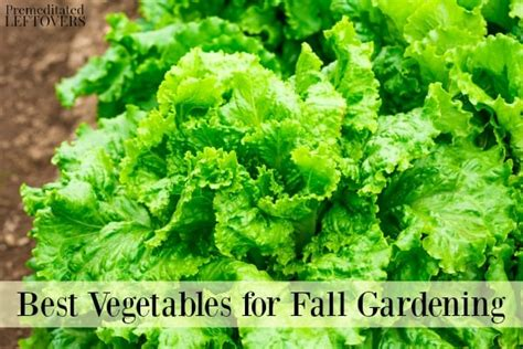 best fall garden vegetables best vegetables for fall gardening