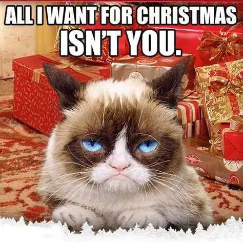Grumpy Cat Meme Christmas - 14 best grump cat christmas memes images on pinterest