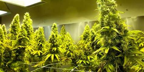 finest   diy hydroponics