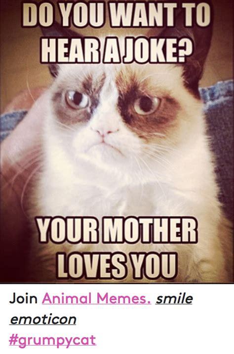 Grumpy Cat Love Meme - 25 best memes about meme animals grumpy cat and love