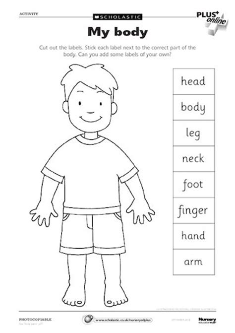 printable label body parts my body early years teaching resource scholastic