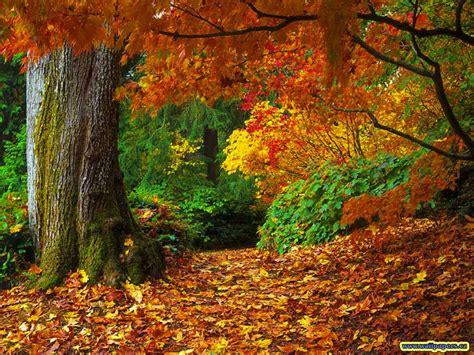 wallpaper background fall desktop wallpaper 9 fall desktop wallpaper
