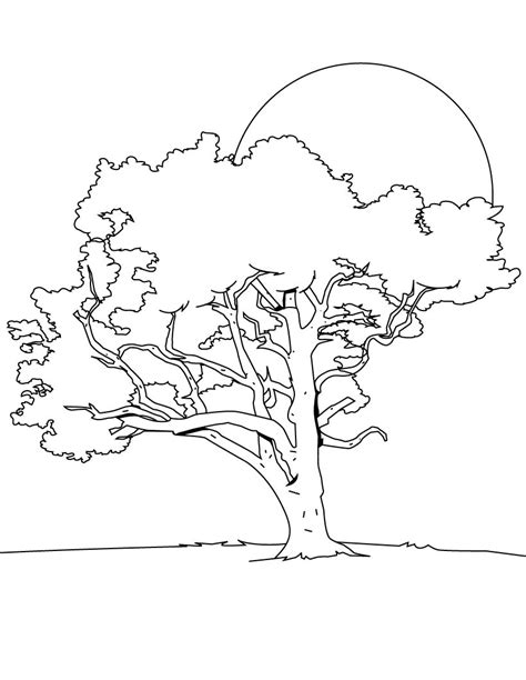 Images Of Tree Coloring Pages Free Printable Tree Coloring Pages For Kids by Images Of Tree Coloring Pages