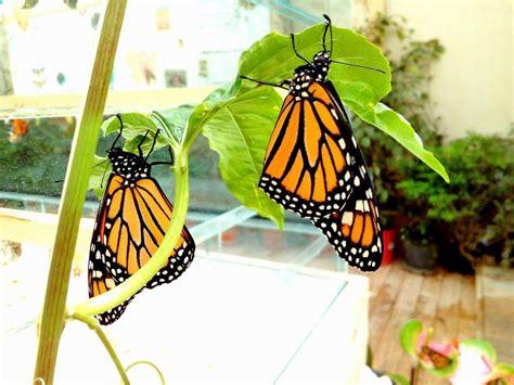 farfalle in casa un iniziativa di beneficenza concluder 224 l edizione 2017