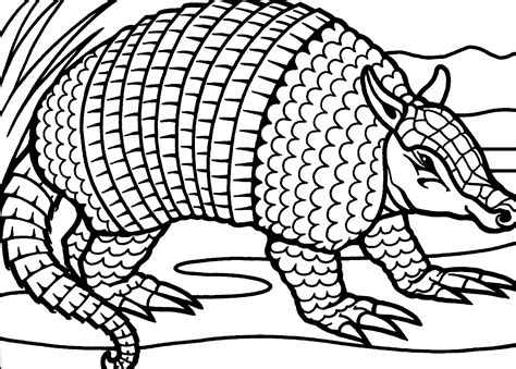 armadillo coloring pages free printable armadillo