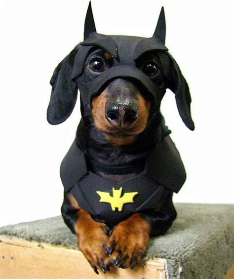 batman dog bed batman dog costume dog beds and costumes dog beds and costumes