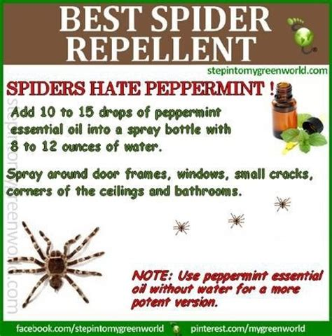 get rid of spiders things to try