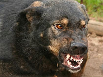 how to an aggressive puppy how to protect yourself from an aggressive tips from transcarpathian rescuers