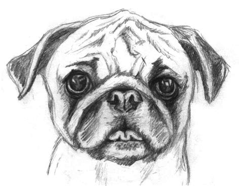 enlightened pugs coloring book books pugs are