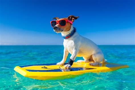 moving to hawaii with dogs veterinary clinic are you moving to hawaii veterinary clinic
