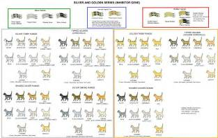 cat color chart colour and pattern charts