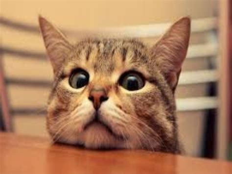 cat episodes cat