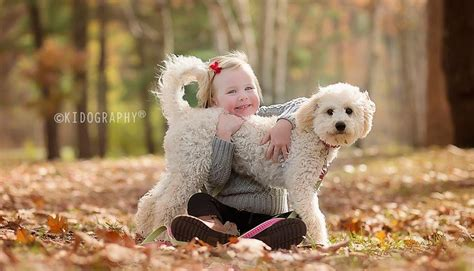 goldendoodle puppy nyc goldendoodle breeder new york orchard pups orchard pups