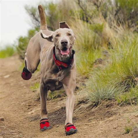 dogs running shoes different environments warrant shoes bandanas