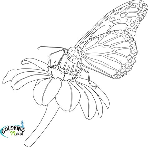Free Coloring Pages Of Life Cycle Of A Butterfly Butterfly Cycle Coloring Page