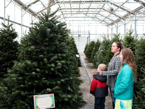 cost of christmas trees at orchard hardware tree prices rise for time in nearly a decade amid u s shortage national post