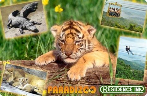 residence inn zoo paradizoo philippines tourist spots