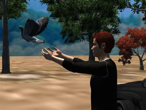 how to catch pigeons for how to catch pigeons 5 steps with pictures wikihow
