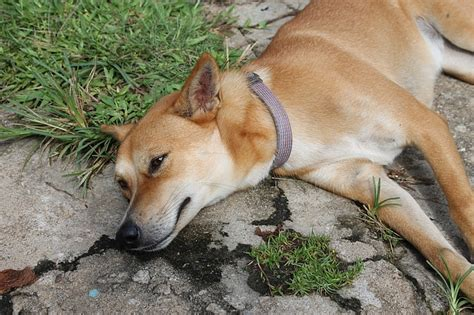 symptoms of bloat in dogs bloat kills nearly half the dogs it affects here s what