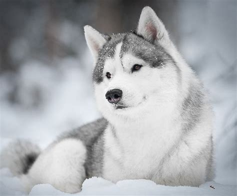 beautiful breeds all list of different dogs breeds beautiful breeds