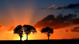 beautiful tree silhouette 34135 1920x1080 px hdwallsource com
