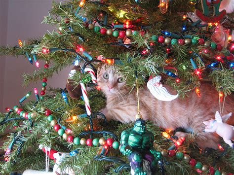 12 tips for a cat safe christmas tree