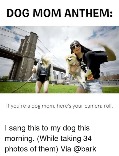 Dog Mom Meme - 25 best memes about dog mom dog mom memes
