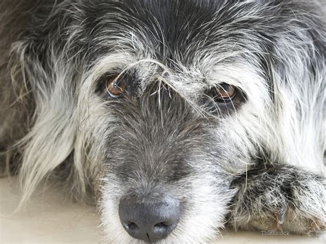 what age is a a senior senior pets age is not a disease
