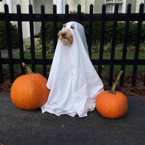 ghost costume for dogs 25 creative costumes for dogs nobiggie