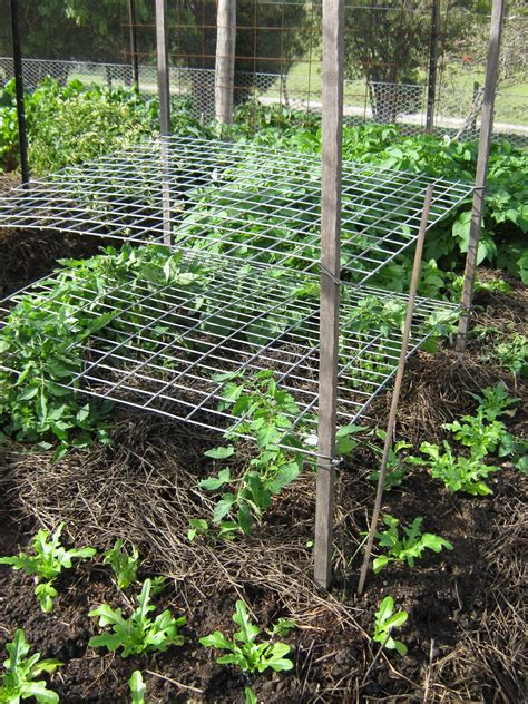 Growing Tomatoes On Trellis vertical panels for tomatoes food production and preservation forums thehomesteadingboards
