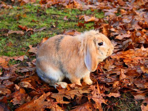 imagenes fondo de pantalla animales fondos de conejo solitario fondos de pantalla de conejo
