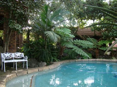 nice swimming pool and green plants everywhere picture