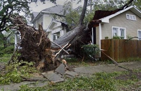 S Tree Fell On House by Tree Fell On Neighbor S Property Insurance Will
