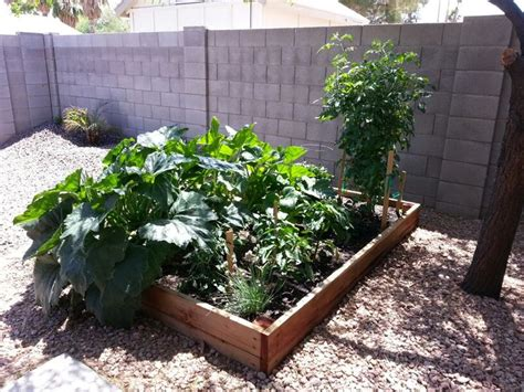 Gardening In Arizona Arizona Vegetable Garden Garden