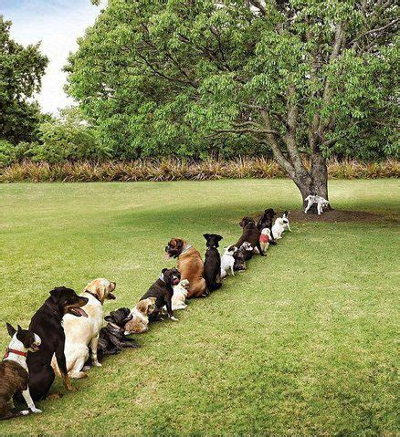 Doggie From Tree by Dogs Waiting In Line To On Tree