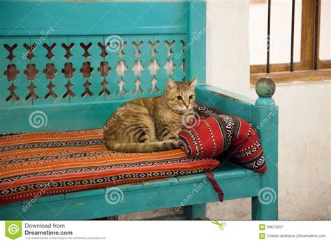 arabic bench cute cat resting on a bench with arabic fabrics stock