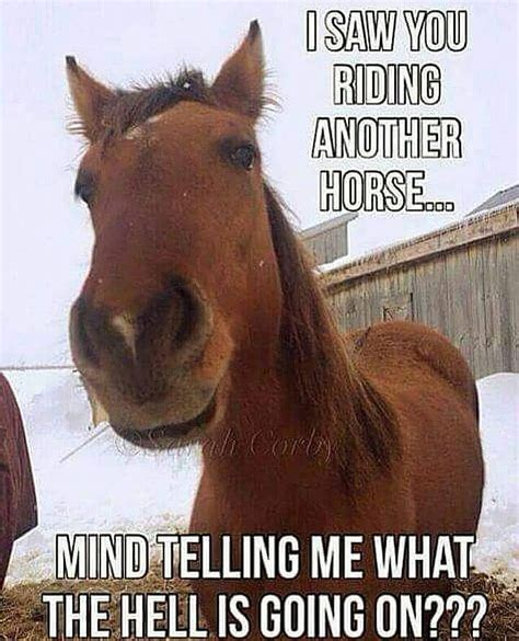 funny horse riding memes