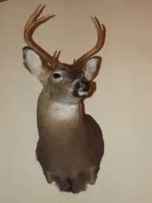 Deer Head Mounted Deer Head Images Amp Pictures Becuo