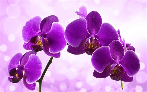pflanzen groß die 52 besten hintergrundbilder der natur blumen und