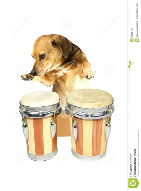 puppy drum drum royalty free stock photography image 29815797