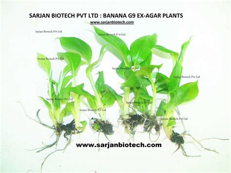 plant tissue culture development and biotechnology books plant tissue culture company india