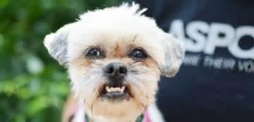 Dogs Aggression Aspca