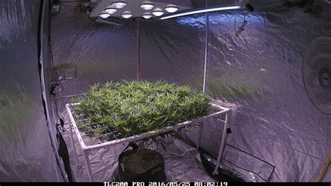 johnson grow lights maximizer johson grow lights maximizer lapse